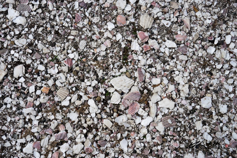 帆立の貝殻が敷き詰められた参道