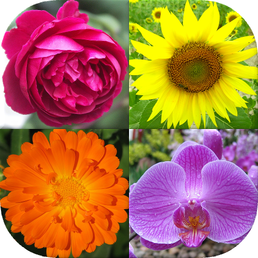 Flowers - Botanical Quiz about Beautiful Plants file APK for Gaming PC/PS3/PS4 Smart TV