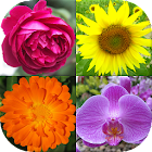 Flowers - Botanical Quiz about Beautiful Plants icon