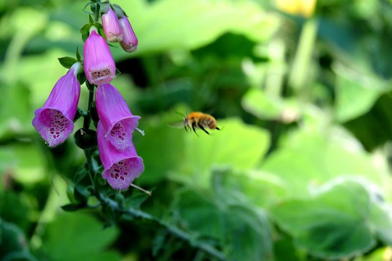 Bee di Segfault