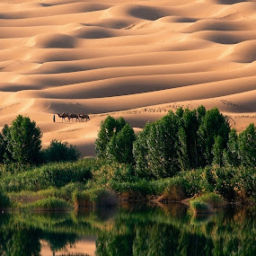 The lake with Deserts by Abbas Mohammed - Landscapes Deserts ( amazing, love, animals, camel, desert, desertsand, camels, lake )
