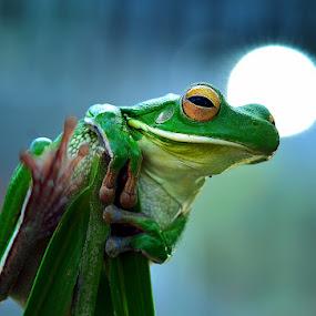 light by Harry Aiee - Animals Amphibians