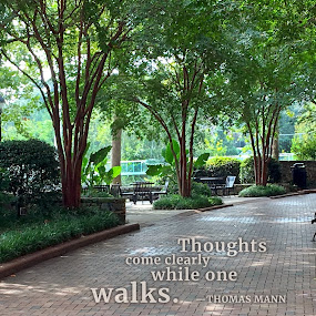Thoughts Come Clearly by Susan Englert - Typography Quotes & Sentences ( path, thoughts, shaded, shady, bench, city, walking, brick, thinking, walk, park )
