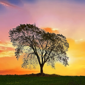 Peaceful by Bill Diller - Landscapes Sunsets & Sunrises ( comforting, michigan, nature, tree, yellow, tranquil, colors, peaceful, orange, calm, sunset, silhouette, calmness, tranquility )