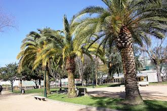 Photo: Palmeiras  Parque de Campolongo