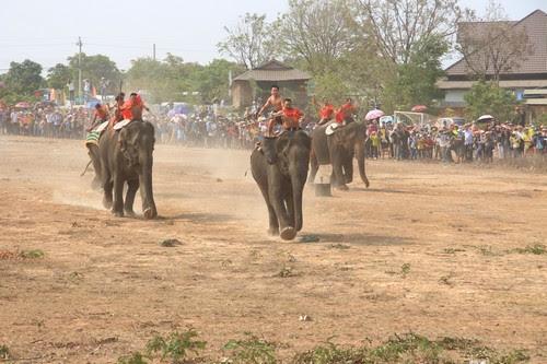 Khu du lịch Buôn Đôn sôi nổi cùng lễ hội voi 5