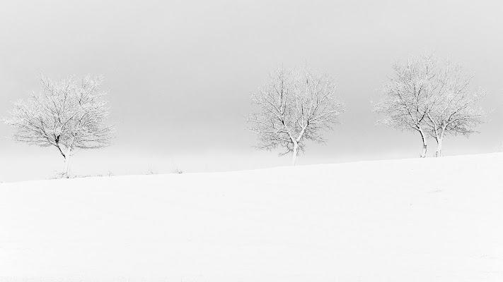 'Abito bianco' di francesca_ciarlantini