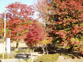 Photo: 火頭古神社
