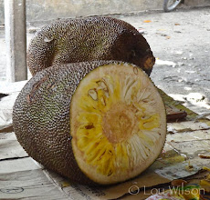 Photo: Jackfruit Grows from the Jackfruit Tree to the size of a watermellon