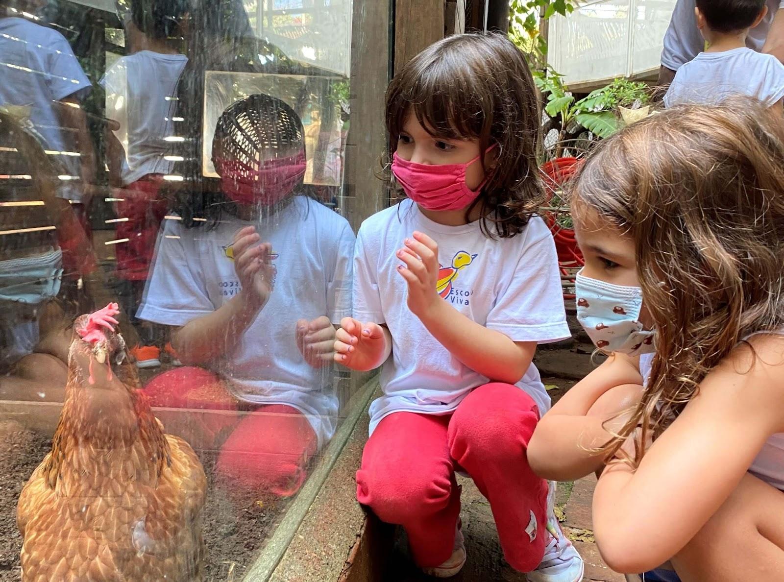 A imagem mostra duas crianças observando uma galinha através de um vidro.