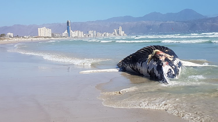 Cape town beaches images