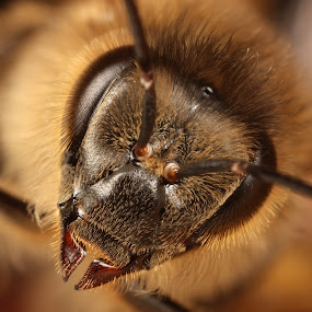 mug shot by Scott Thompson - Animals Insects & Spiders ( canon, hive, bees, bee )