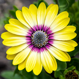 Yellow Flower by Dave Lipchen - Flowers Single Flower ( yellow flower )