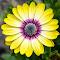 Flower-50.jpg