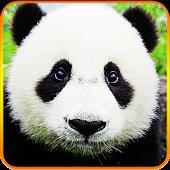 Cute Lazy Panda