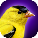 iBird Yard Plus Guide to Birds icon