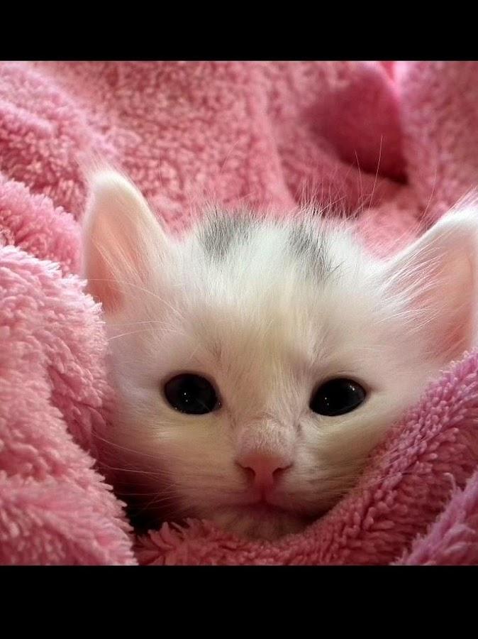 Ταπετσαρίες με γάτες HD - στιγμιότυπο οθόνης
