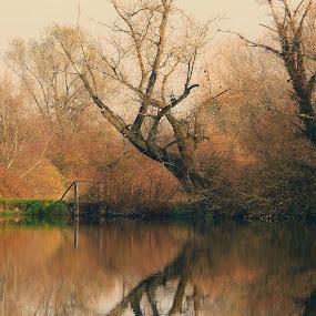 Lake by Dunja Dretvić - Landscapes Waterscapes