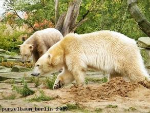 Photo: Oh, Gianna ist auf meinem Sandhaufen ;-)