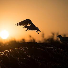 © Vlad Popescu www.vladpopescu.zenfolio.com by Vlad Popescu - Animals Birds