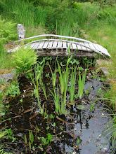 Photo: The garden pond.