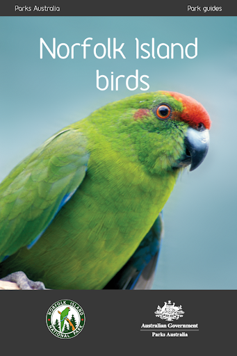 Norfolk Island Birds