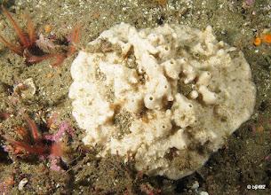 Photo: Sea sponge