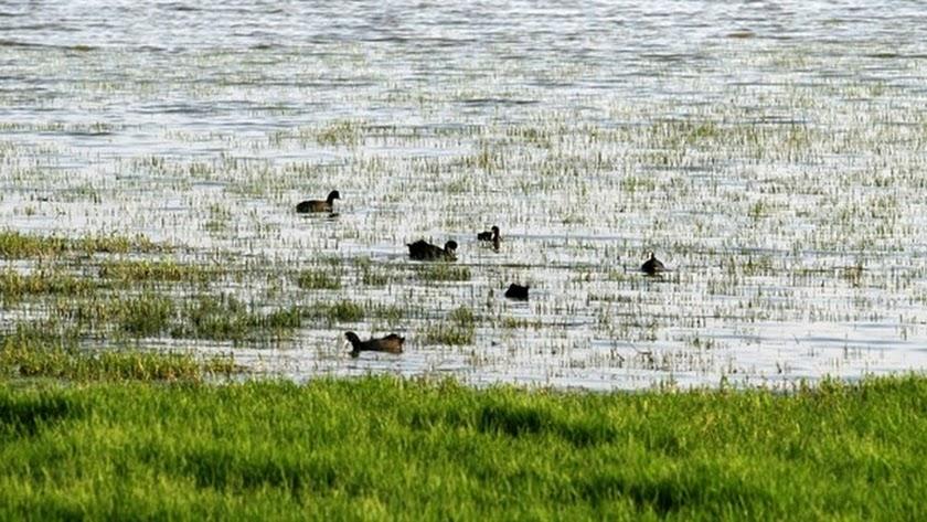 Imagen de archivo de la Junta de Andalucía del Parque Natural de Doñana.