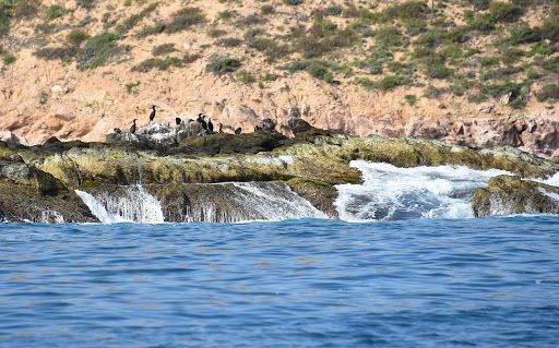 cormorants.jpg - Seabirds (cormorants?) sit on the rocks along a snorkeling area in Los Cabos.