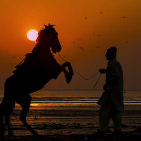 by Israr Shah - Animals Horses