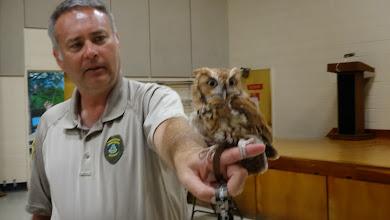 Photo: Lulu a Screech Owl
