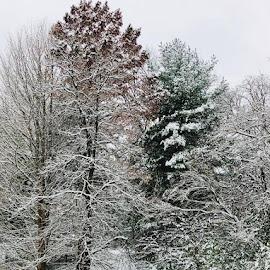 Postcard Worthy Winter Scene by Lori Fix - Landscapes Weather