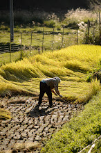 """Photo: This photo appeared in an article on my blog on Oct 3, 2013. この写真は10月3日ブログの記事に載りました。 """"Random Shots from a Kyoto Countryside Tour"""" http://regex.info/blog/2013-10-03/2318"""