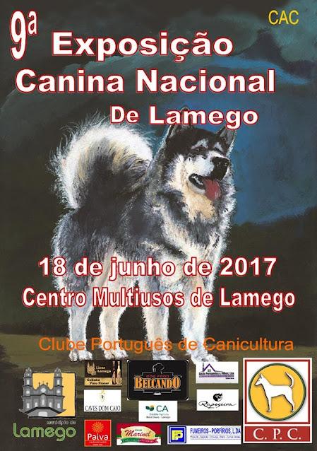 """Lamego volta a eleger o cão """"Campeão Nacional de Beleza"""""""