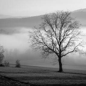 by Crazy  Photos - Black & White Landscapes