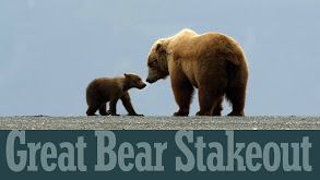 Great Bear Stakeout thumbnail