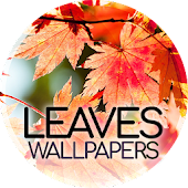 Leaves wallpapers
