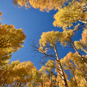 Above it all by Shirley Prothero - Nature Up Close Trees & Bushes ( sparkle, landscape photography, fall colors, trees,  )