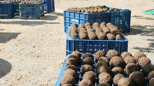 La V Jornada de Plantación 'bombardeará' el campo con semillas el 1 de mayo