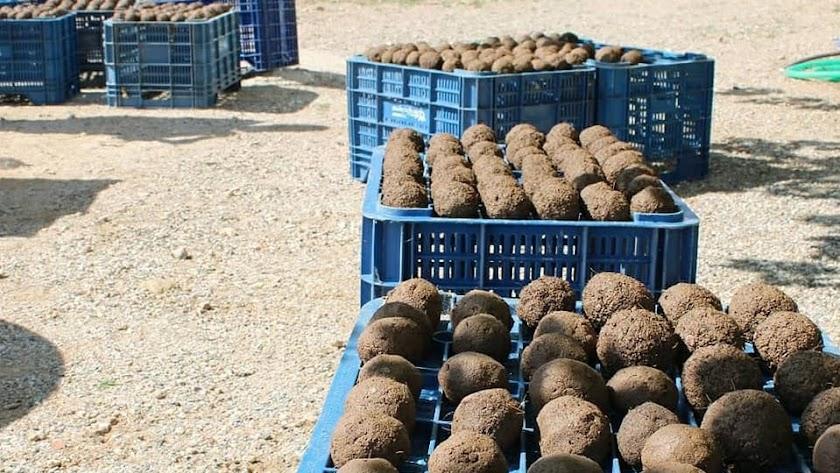 Bombas de Semillas fabricadas en un taller de Ecologistas en Acción.