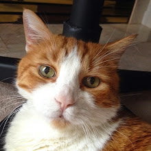 Photo: Mr. Tom portrait July 2014 #intercer #cat #cats #pet #pets #portrait #eyes #face #funny #beautiful #catsofinstagram #petsofinstagram #catofheday #lovely #cute #meow - via Instagram, http://ift.tt/1mwLuvt