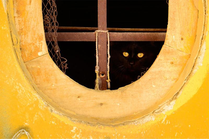 Occhi di gatto di Simona Monzani