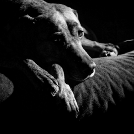 Lucy  by Todd Reynolds - Black & White Animals