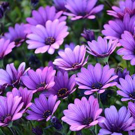 by M K - Flowers Flower Gardens