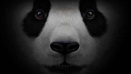 Pandabox P2P screenshots 2