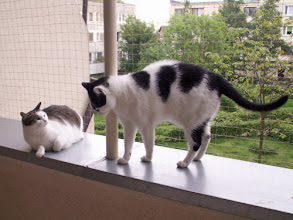 Photo: Koty korzystają z zabezpieczonego balkonu