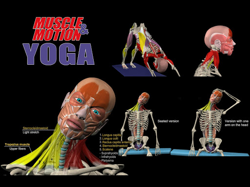 Muscle and Motion YOGA 1.4.25 screenshots 5