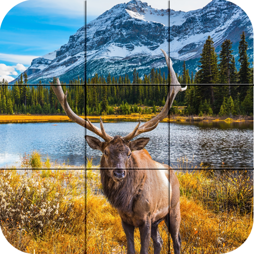 Puzzle - Forest animals