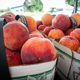 Peaches by Donna Davis Kasubeck - Food & Drink Fruits & Vegetables (  )