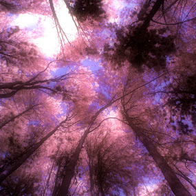 Under by Agung Cahyono - Landscapes Forests